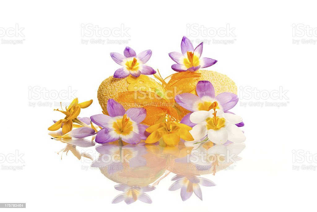 Easter eggs with  crocuses royalty-free stock photo