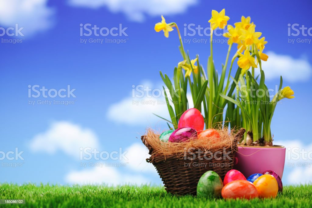 Easter eggs with daffodils royalty-free stock photo