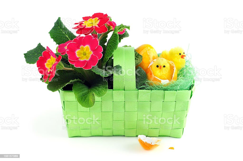easter eggs with pinkt primula Primrose chicken in green basket stock photo