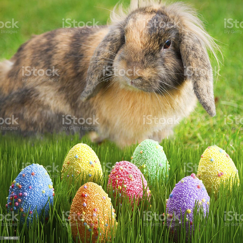 Easter eggs with rabbit on the grass royalty-free stock photo