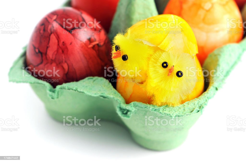 Easter eggs with two young chicken in green carton stock photo