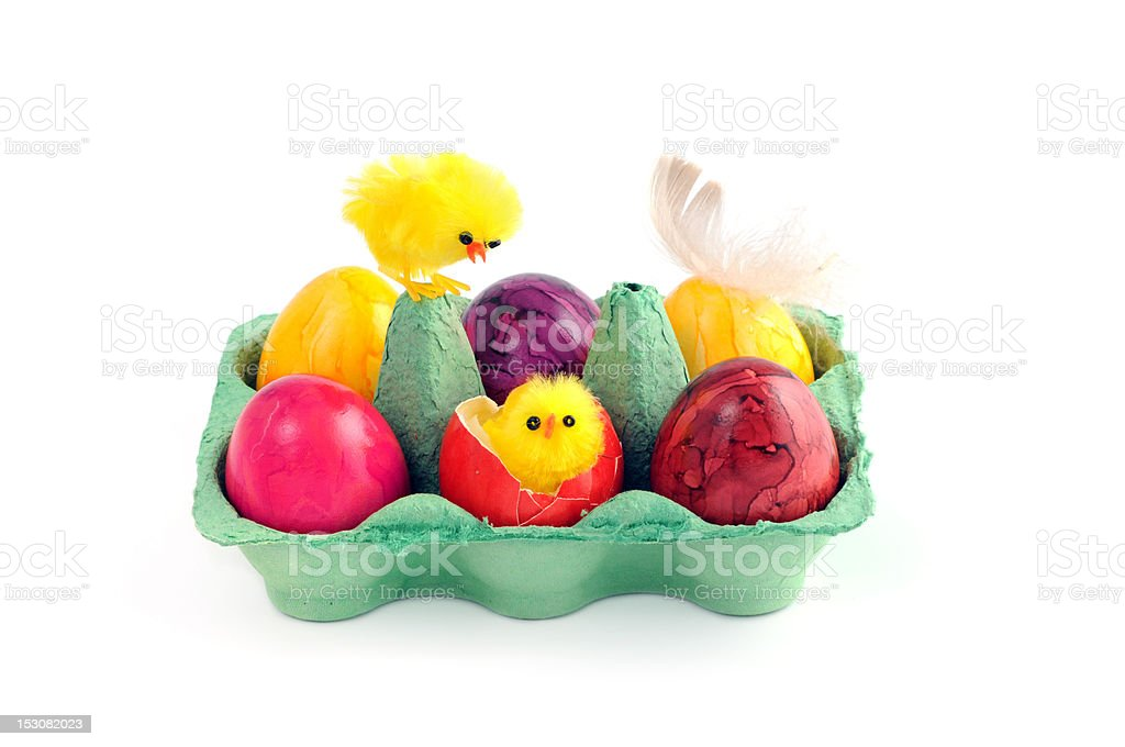 easter eggs with young chicken and feather in green carton stock photo