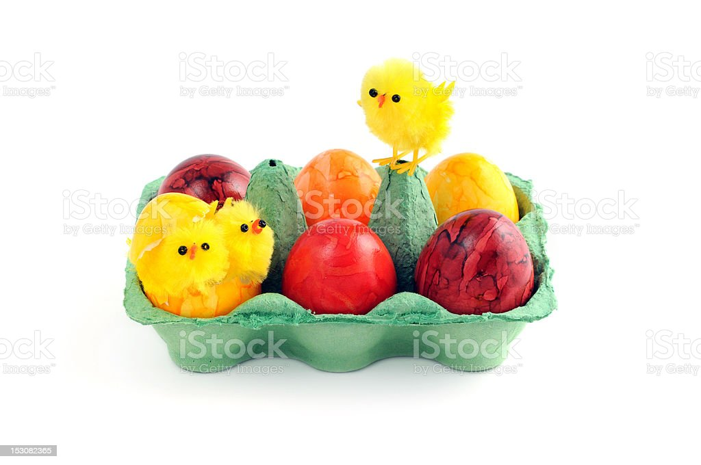easter eggs with young chicken in a green carton stock photo