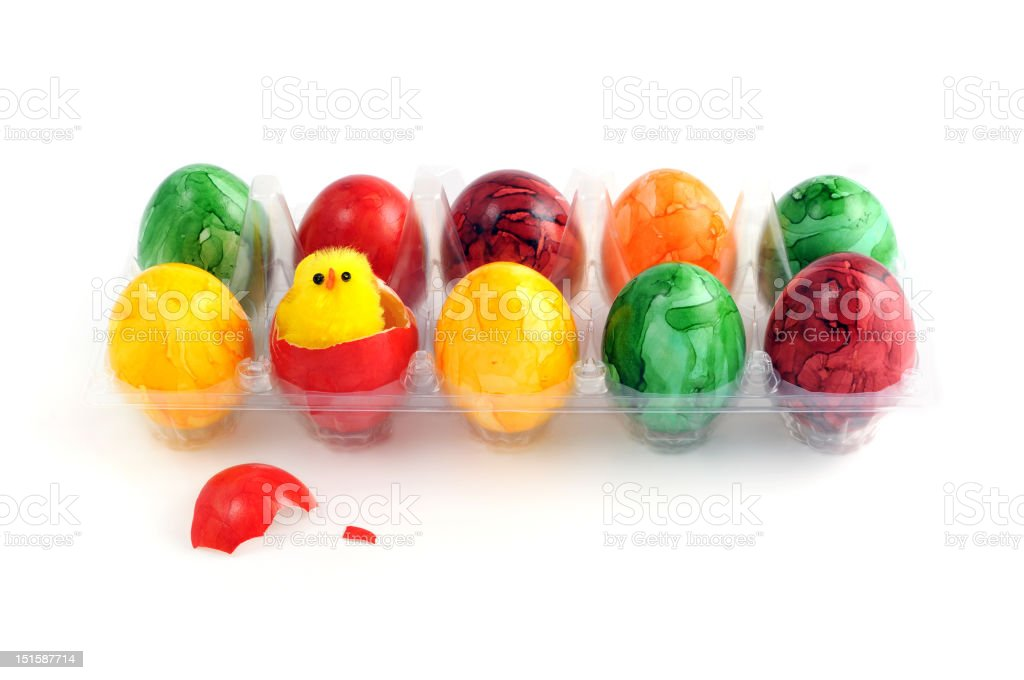 easter eggs with young chicken in a transparent carton stock photo