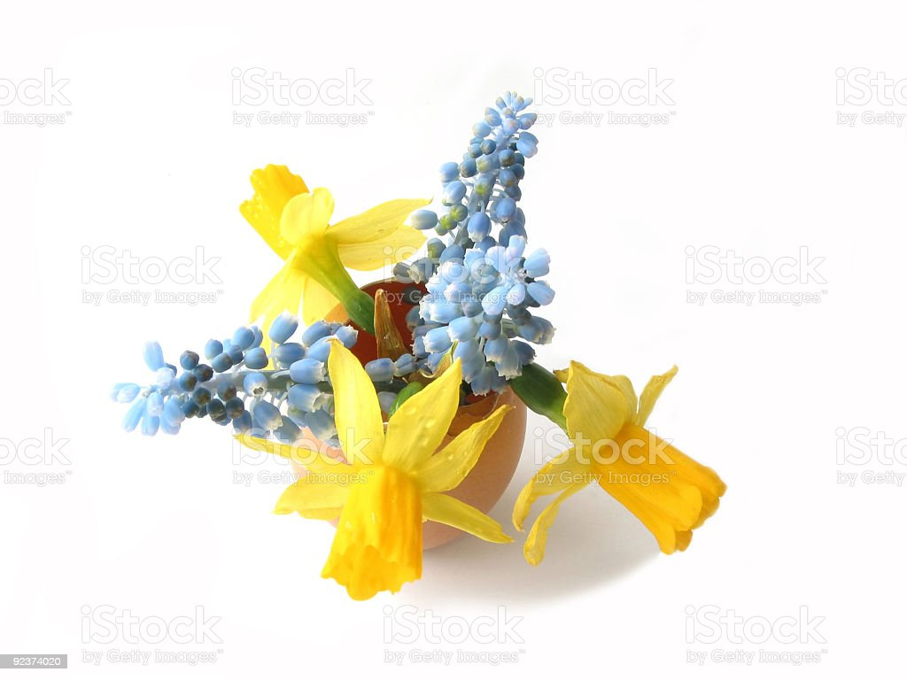 Easter flowers in egg shell royalty-free stock photo