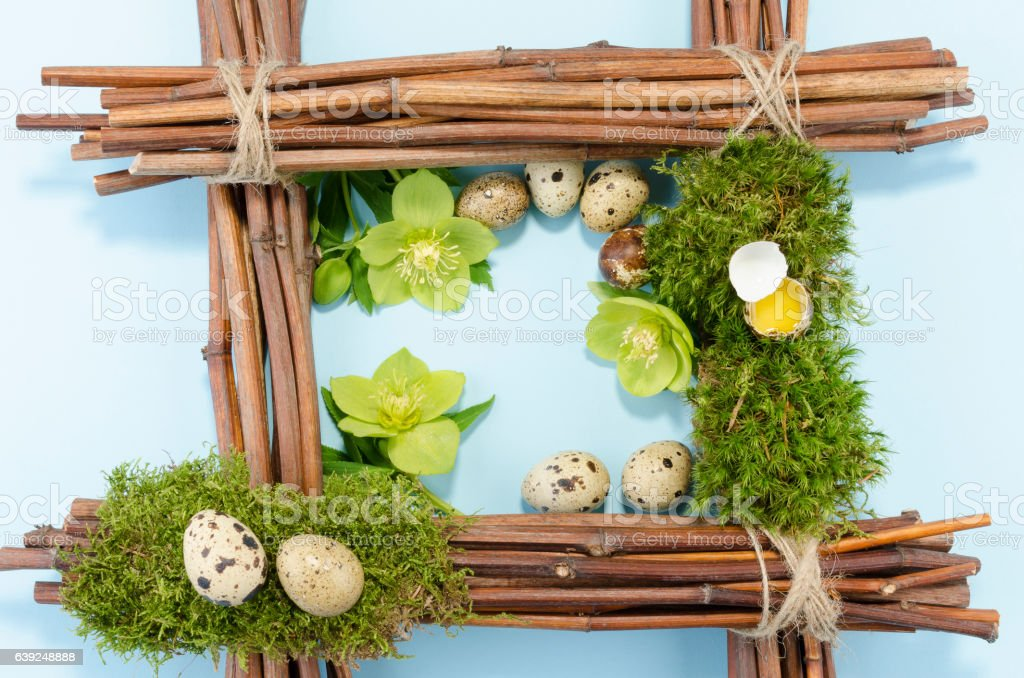 Easter frame with eight quail eggs and three hellebore flowers stock photo