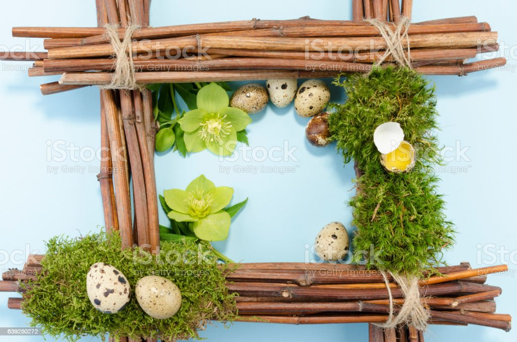 Easter frame with seven quail eggs and two hellebore flowers stock photo