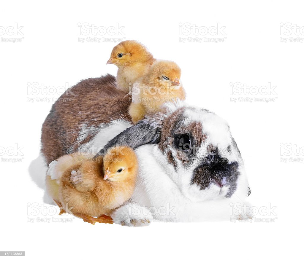 Easter friends royalty-free stock photo