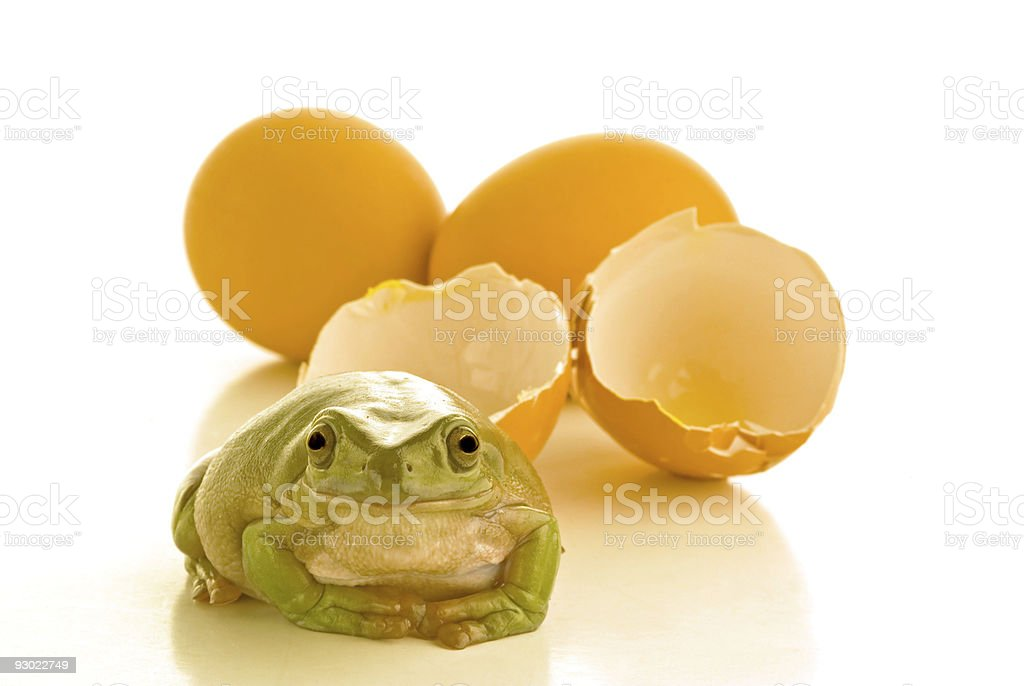 Easter Frog royalty-free stock photo