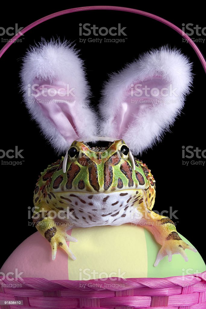 Easter Froggy stock photo