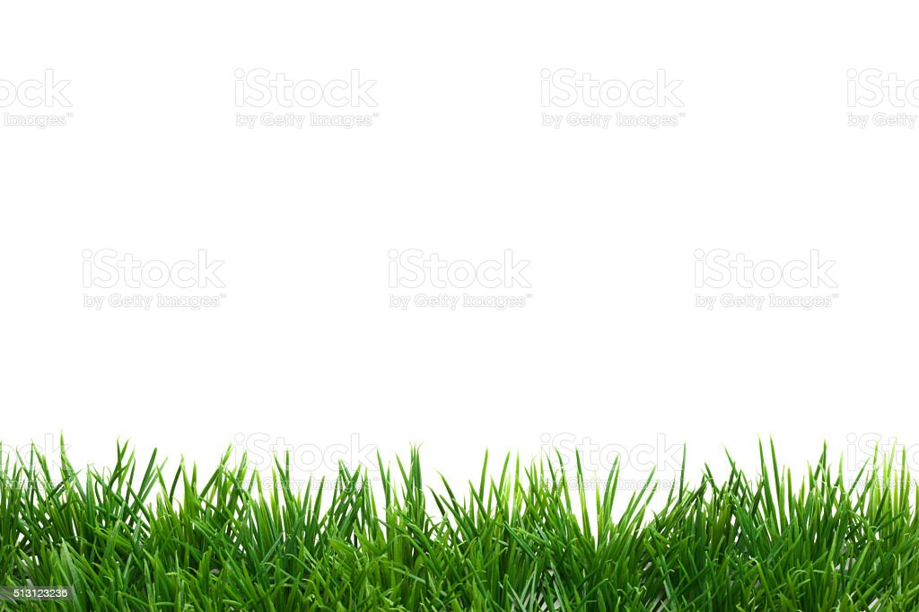 Easter Grass border, isolated on white stock photo