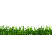 Easter Grass border, isolated on white