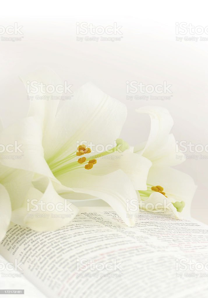 Easter lilies on a KJV Bible royalty-free stock photo