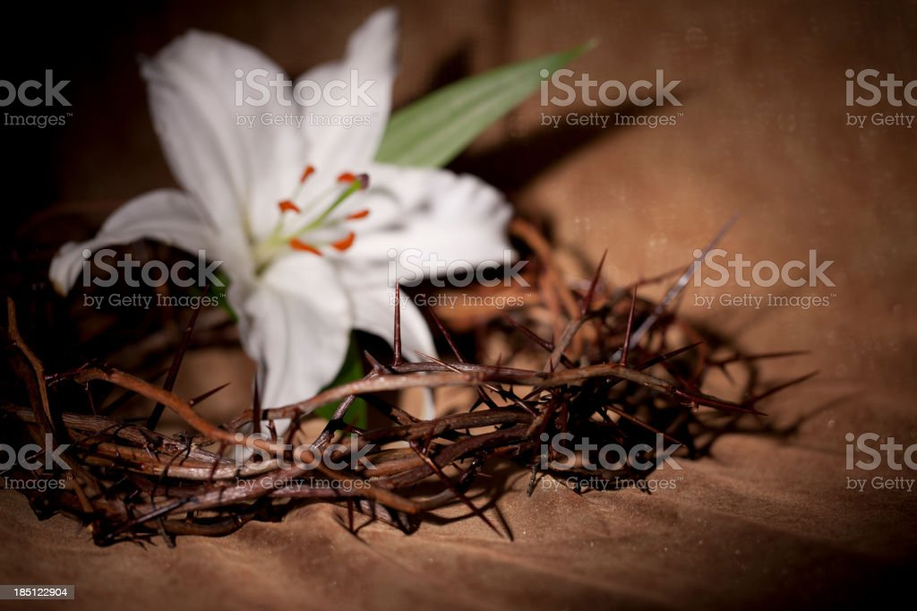 Easter Lily and A Crown of Thorns royalty-free stock photo