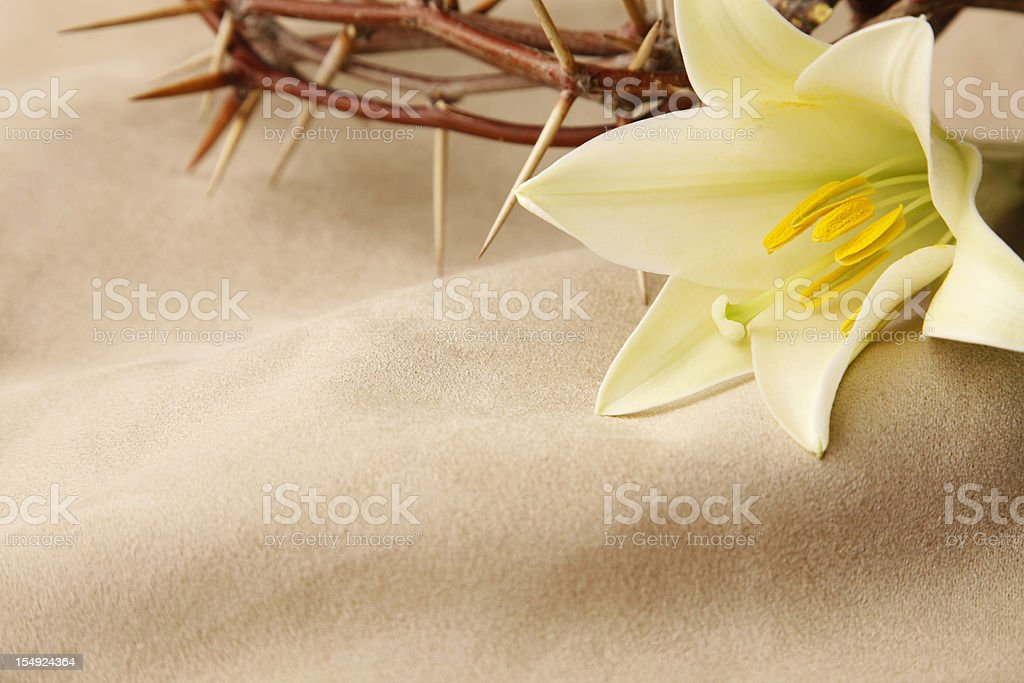 Easter Lily and Crown of Thorns stock photo