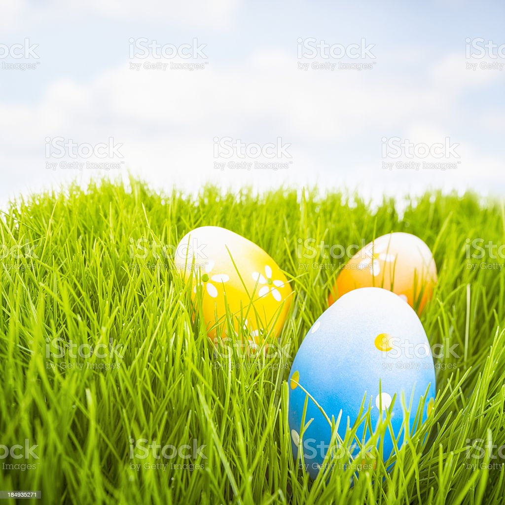 Easter Meadow stock photo