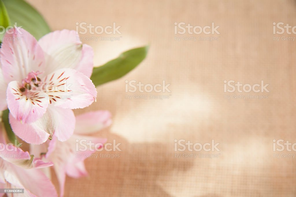 Easter, Mother's Day. Flower bouquet on burlap background. stock photo