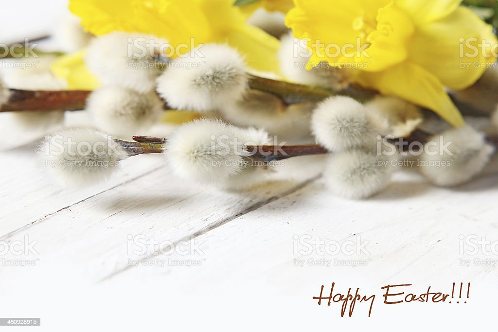 easter narcissus and pussy willows royalty-free stock photo