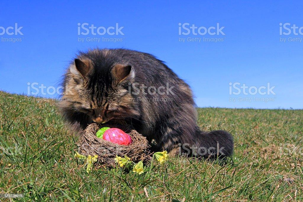 Easter nest stock photo