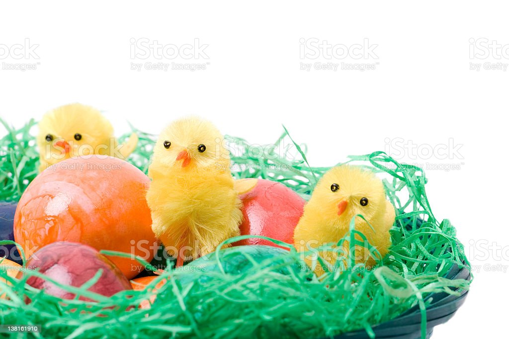 Easter nest with eggs and chicks royalty-free stock photo
