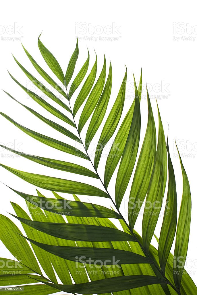 easter palm branch stock photo