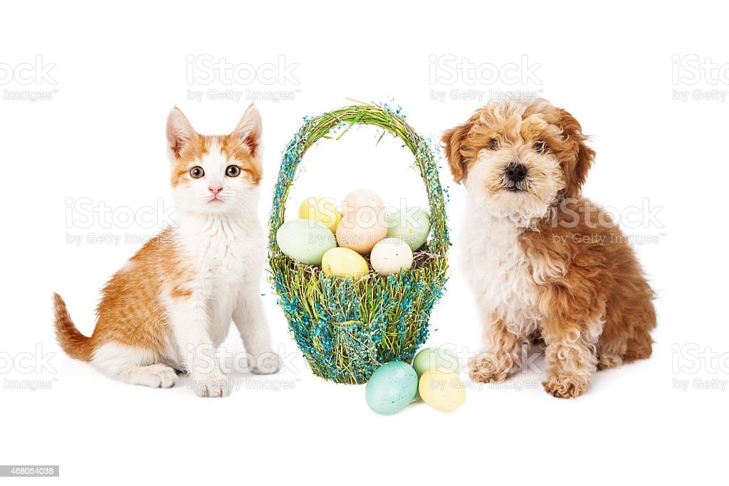 Easter Puppy Dog and Kitten stock photo