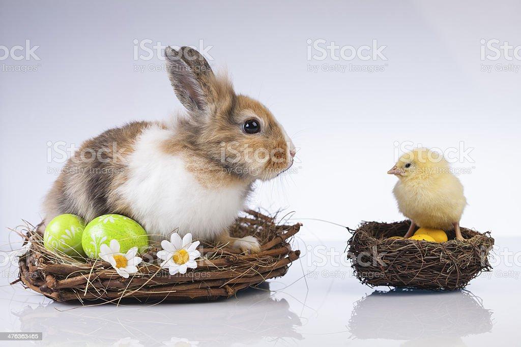 Easter, Rabbit, Bunny, Egg stock photo