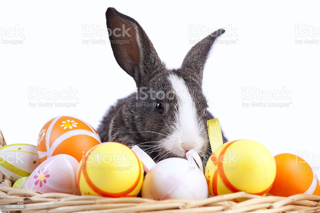 Easter Rabbits royalty-free stock photo