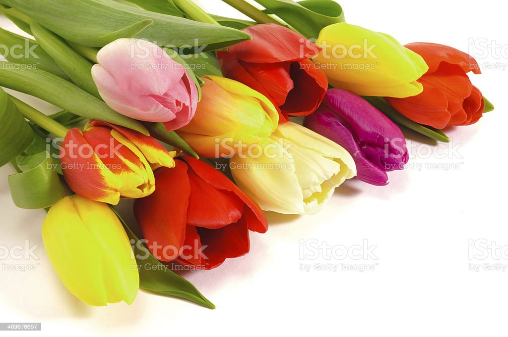easter tulips royalty-free stock photo