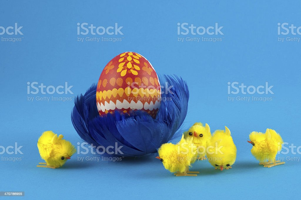 Easteregg in blue feather nest with chick stock photo