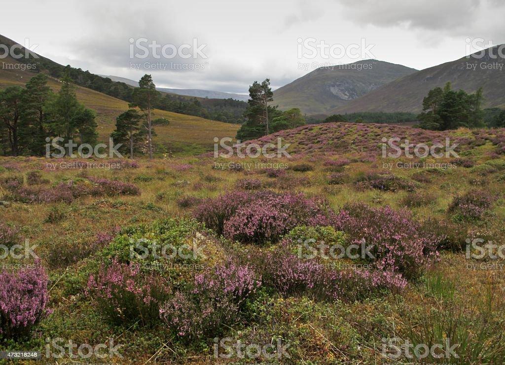 Eastern Highlands, Scottland stock photo