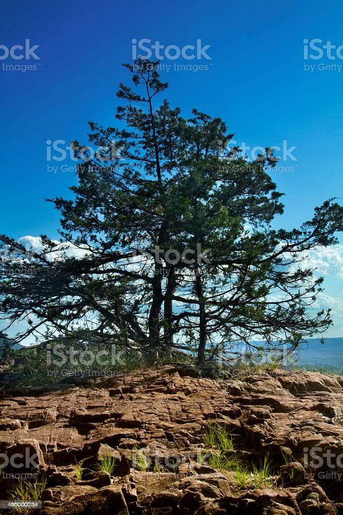 Eastern red cedar near summit, Ragged Mountain, Berlin, Connecticut, vertical. stock photo