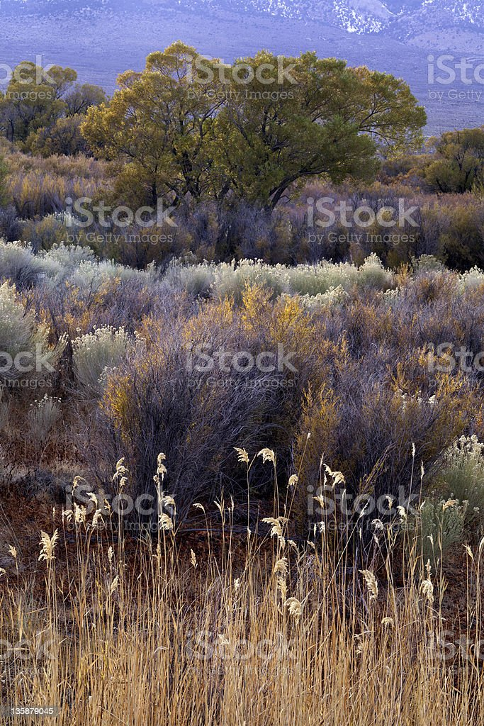 Eastern Sierra Foliage royalty-free stock photo