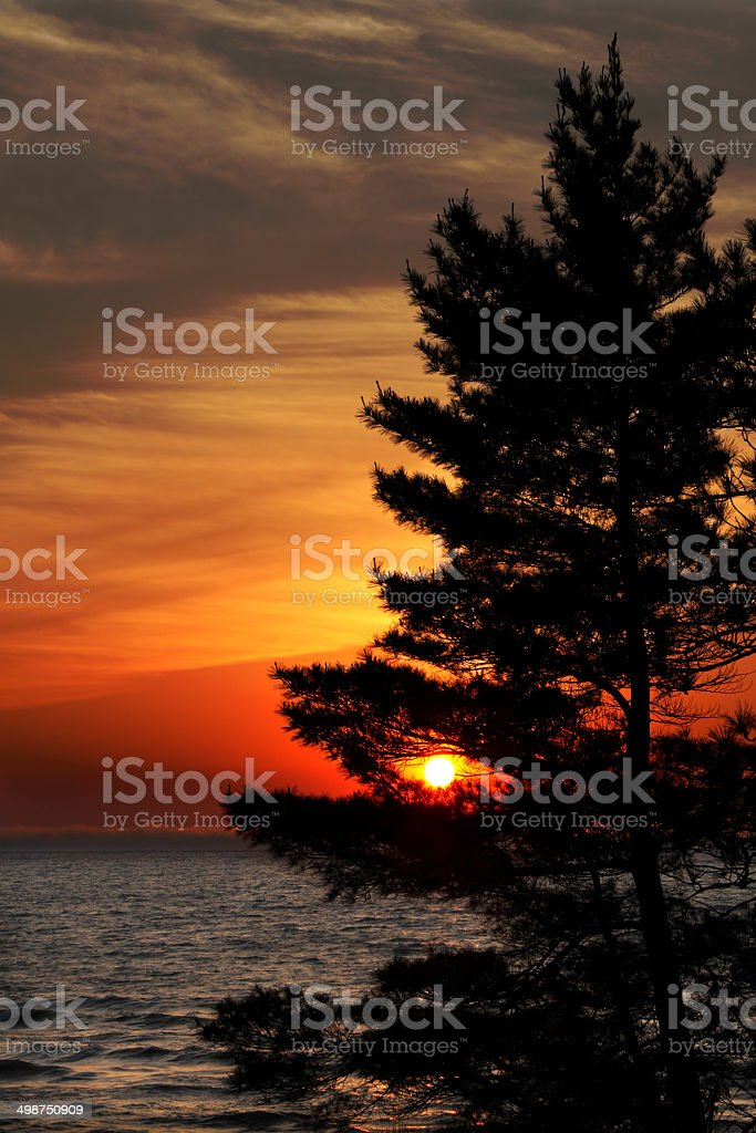 Eastern White Pine on Shore of Lake Huron at Sunset stock photo