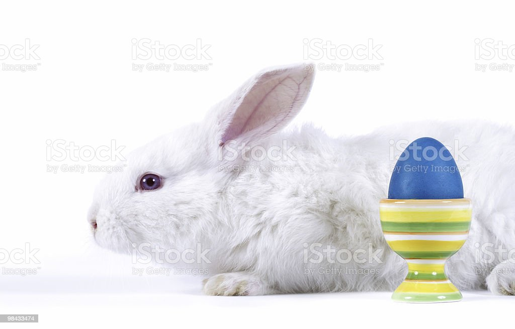 Easter-rabbit stock photo