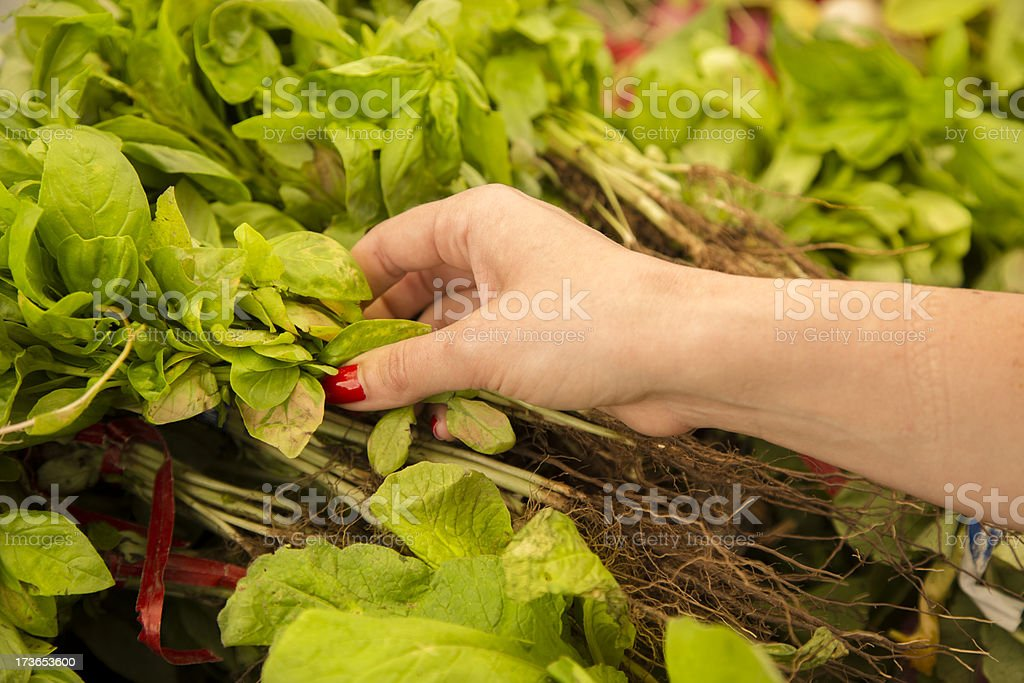 Eat and Drink:  Woman selecting fresh basil open air market. royalty-free stock photo