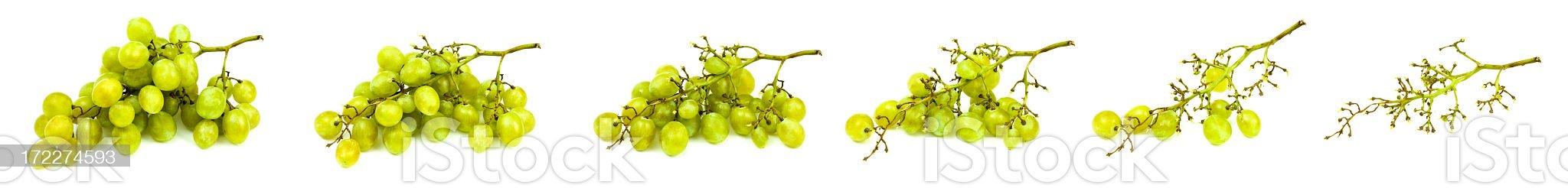 eating a tasty ripe white grape royalty-free stock photo