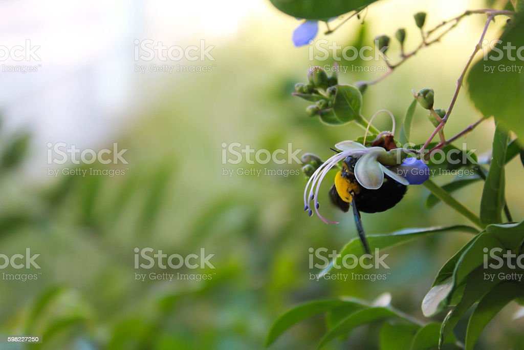 Eating bumble bee royalty-free stock photo