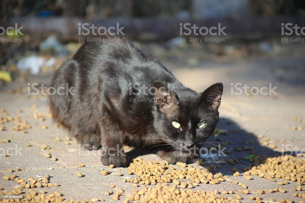 Eating Cat stock photo