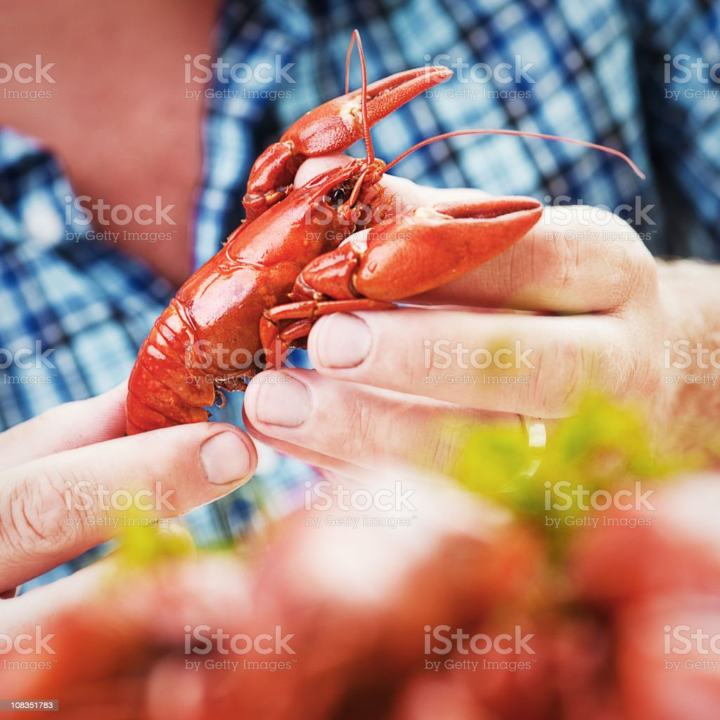 Eating Crayfish stock photo