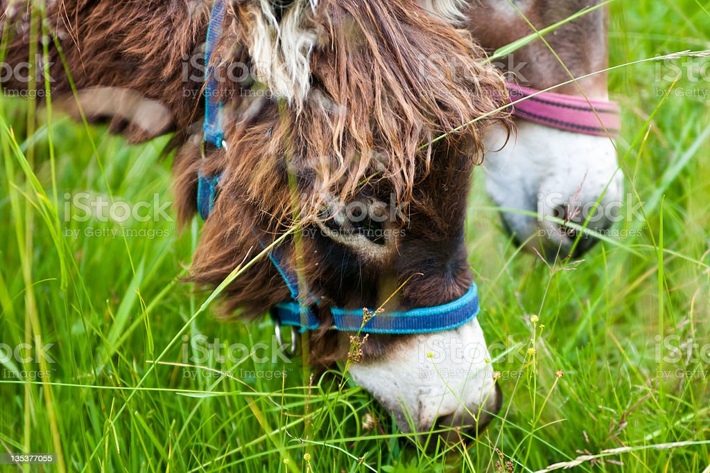 eating donkeys in summer field royalty-free stock photo