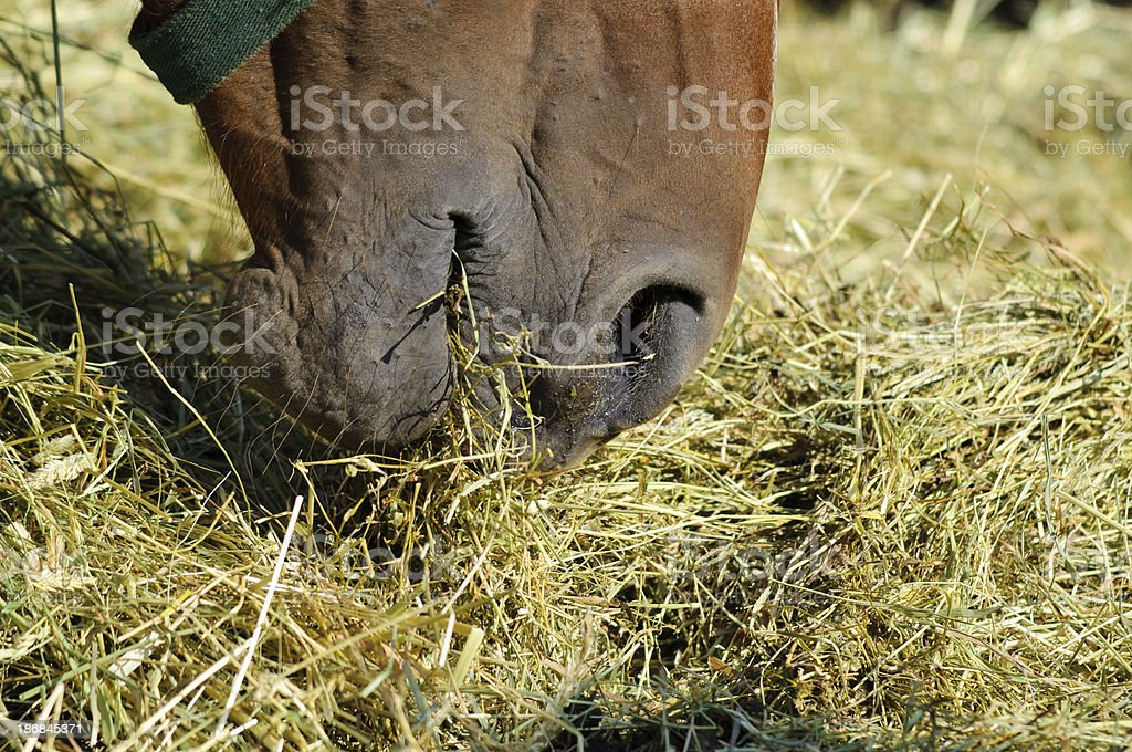 Eating horse detail stock photo