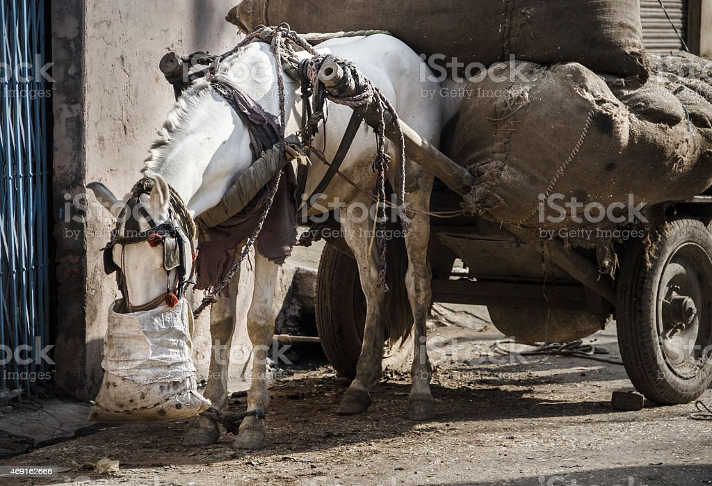 Eating horse on rural street stock photo