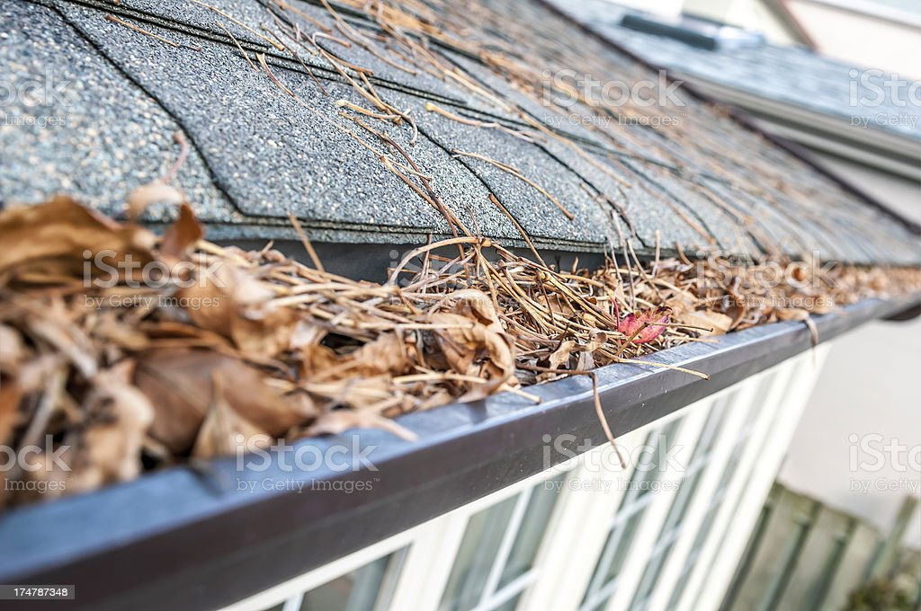 Eavestrough clogged with leaves - III stock photo