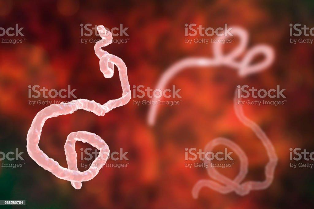 Ebola virus, hemorrhagic fever virus stock photo