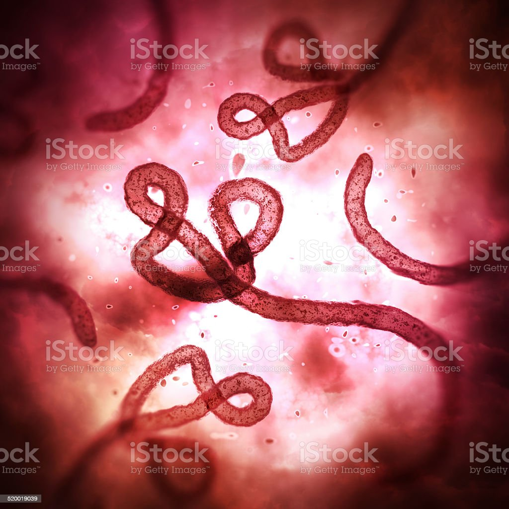 Ebola virus under microscope stock photo