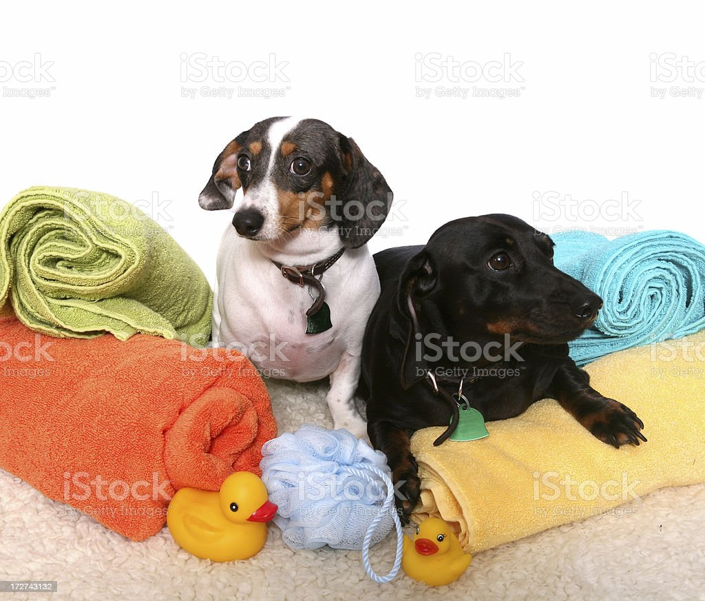 Ebony and Ivory royalty-free stock photo