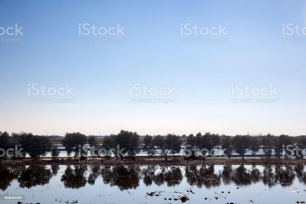 Ebro Delta stock photo