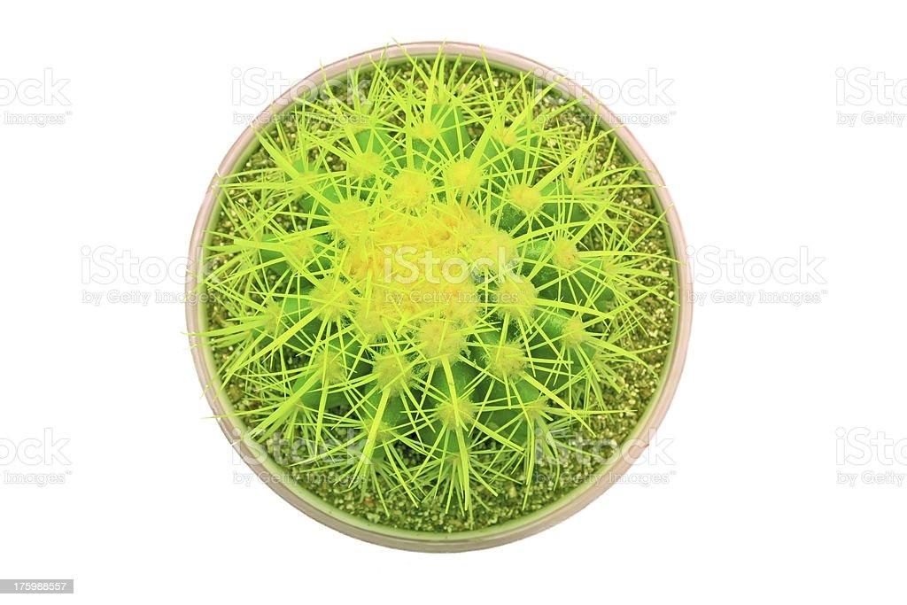 echinocactus grusonii royalty-free stock photo