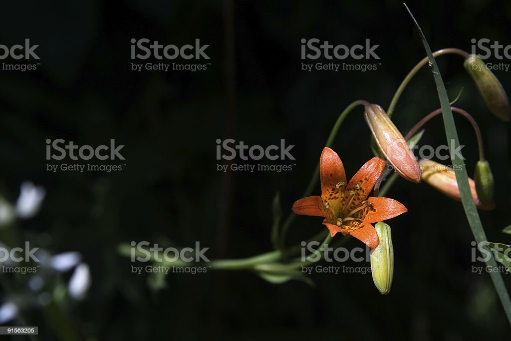 Eclectic Little Flower. royalty-free stock photo